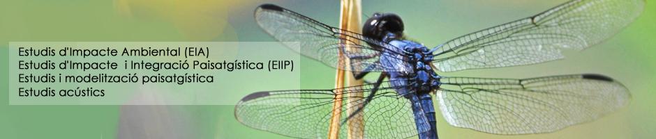 estudis-impacte-ambiental-eia-integracio-paisatgistica-eiip-modelitzacio-acustic