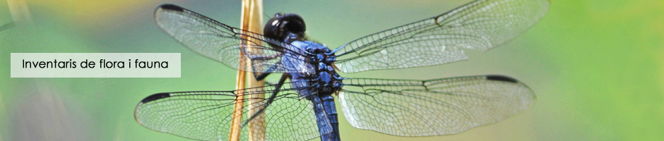 inventari-flora-fauna-projectes-ambientals-medi-ambient