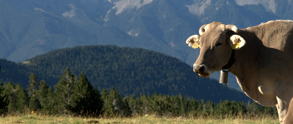 Explotacions ramaderes