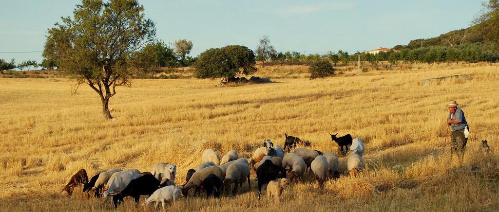 Agroturismos y casas rurales