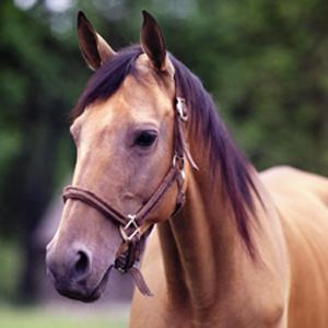 Hípiques i explotacions equines