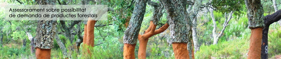 assessorament-possibilitat-demanda-productes-forestals