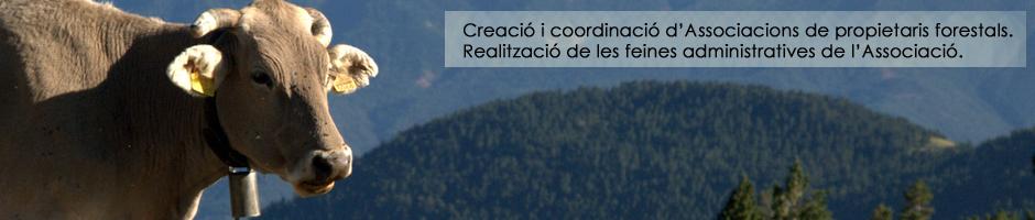 associacio-propietaris-forestals-gestio-coordinacio-administracio