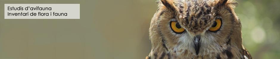 estudi-avifauna-inventari-flora-aus-fauna