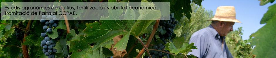 estudis-agronomics-cultius-fertilitzacio-viabilitat-economica-CCPAE