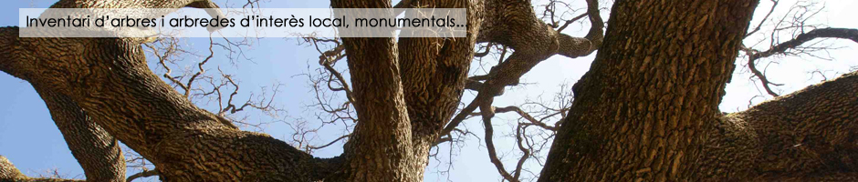 inventari-arbres-arbredes-interes-local-monumentals-medi-ambient-administracio