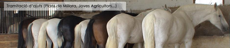 tramitacio-ajuts-plans-millora-cge-joves-agricultors-hipiques-ases-rucs-cavalls