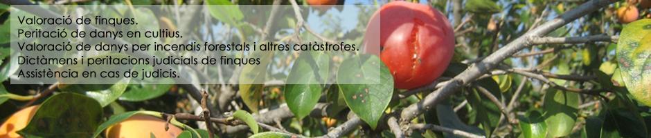 valoracio-danys-cultius-fruiters-pedregada-judicis-peritacio-dictamens