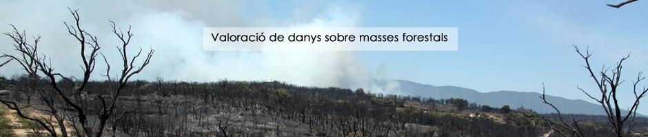 valoracio-peritacio-danys-masses-forestals-medi-ambient